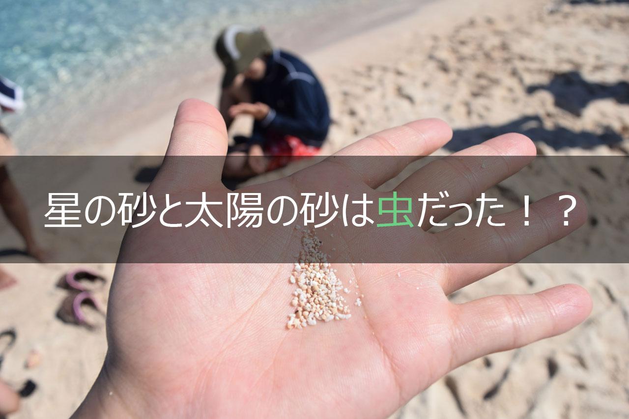 星の砂と太陽の砂は虫だった!?