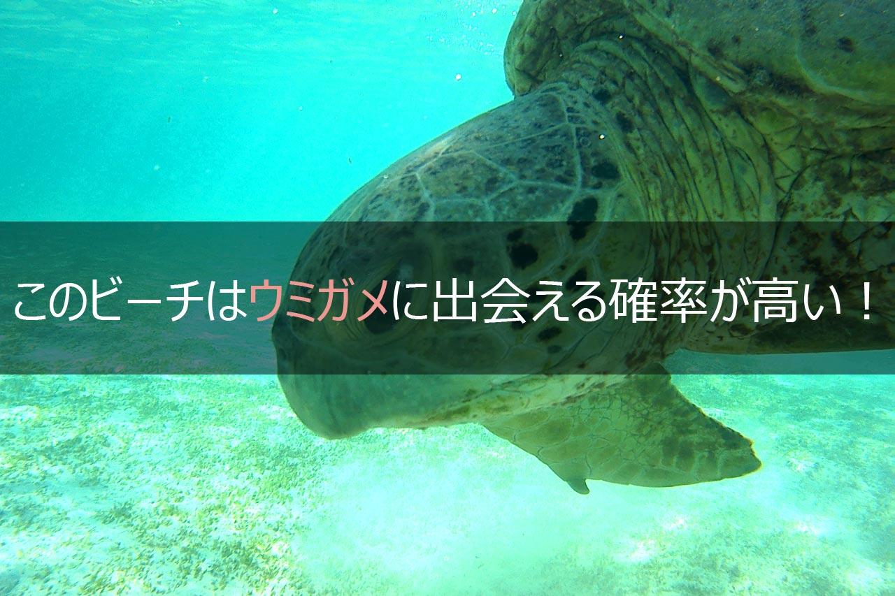 与論島 ウミガメに会える絶景ビーチ! 皆田海岸!