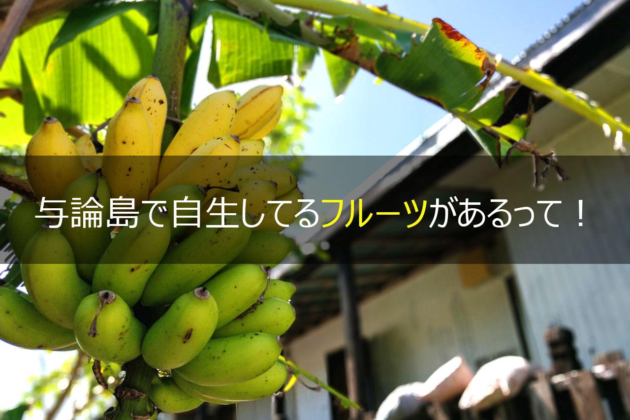 与論島で自生してるフルーツがあるって!