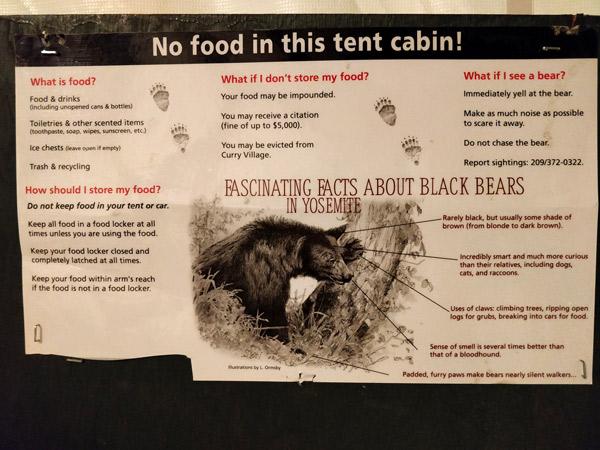 注意点1:ヨセミテ国立公園では熊の対策をしないと罰金約50万円($5,000)