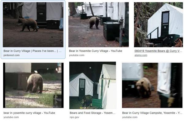 熊対策として注意するシチュエーション