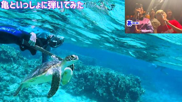 たなしん(タナブロ) in 与論島【亀といっしょに弾いてみた】