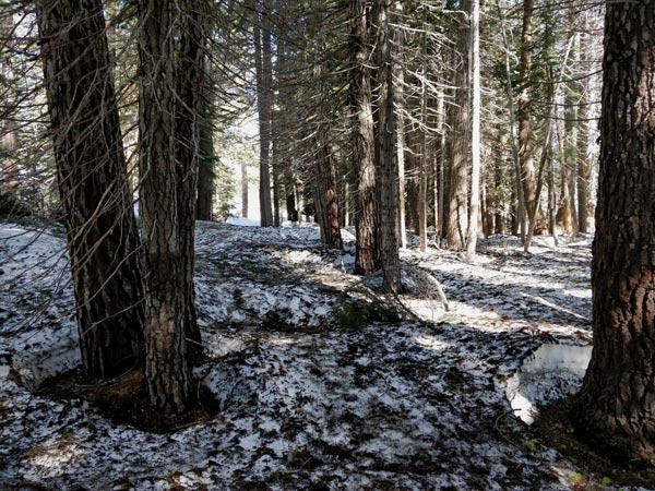 タフトポイントまでのハイキング 混雑度と歩きやすさ