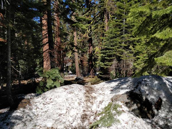 タフトポイントのハイキング 森の中へ突入