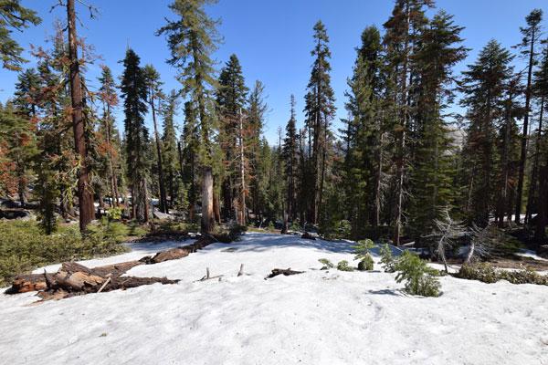 まとめ:ヨセミテ国立公園 タフトポイントまでのハイキング