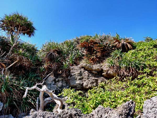 ムヌイシー海岸の景色